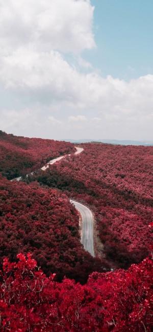 红火美艳的秋天