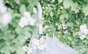 日系小清新淡綠溫柔舒緩風格唯美壁紙