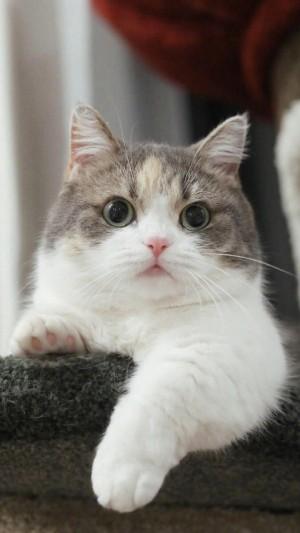 軟萌可愛小貓咪手機壁紙