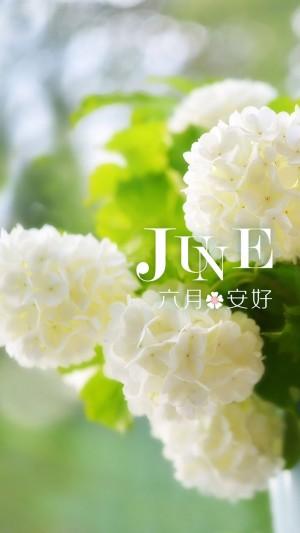 六月清新的小花