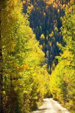 大兴安岭的林间小路