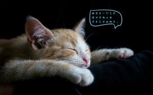 好困好想睡觉的个性说说配图