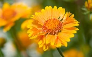 清新养眼的花卉图片桌面壁纸