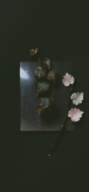 炫彩花朵艺术手机壁纸
