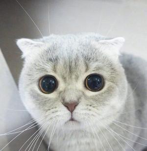 萌系可爱大眼睛小猫咪无辜委屈表情写真
