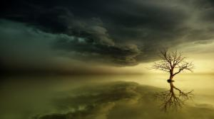 天空 大海 日落 树 魔法 黎明 唯美有意境风景壁纸