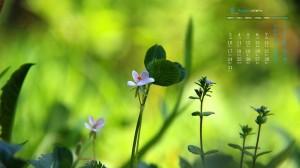 2020年8月清新养眼植物高清日历壁纸