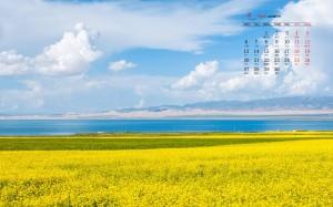 2020年4月唯美油菜花田日历壁纸