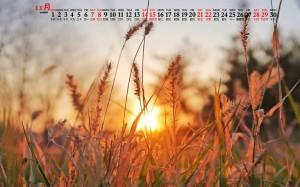 2020年11月秋季唯美景色图片日历壁纸