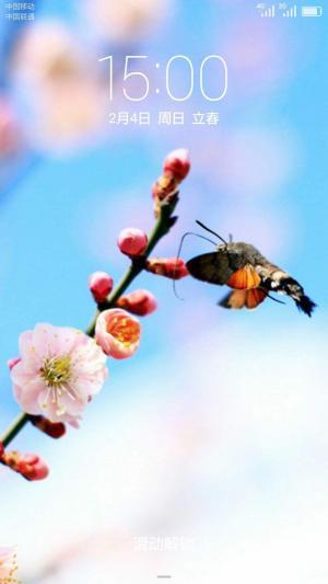 二十四节气之立春唯美花朵手机壁纸