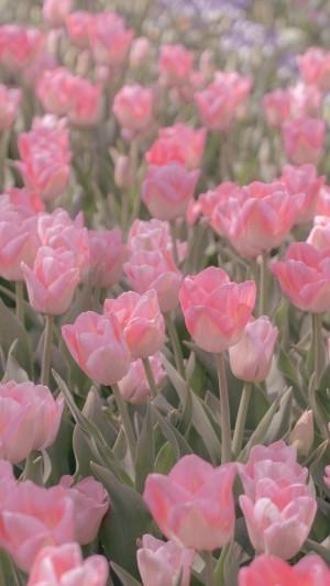 少女心粉色花朵手机壁纸