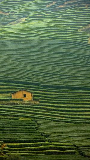 福建武夷山的茶山