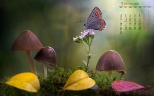 2019年9月五彩斑斓蝴蝶图片日历壁纸