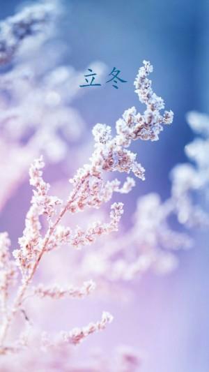瑞雪临,立冬至