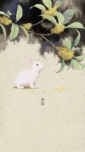 寒露之桂花树下的小白兔