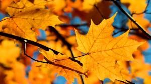 秋日唯美黄叶高清桌面壁纸