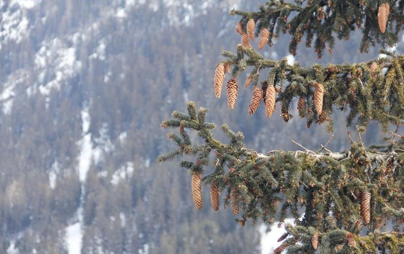 自然雪景风景图片