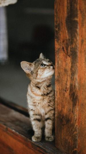 超可爱萌系调皮小猫咪