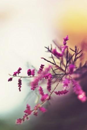 唯美意境治愈花朵图片