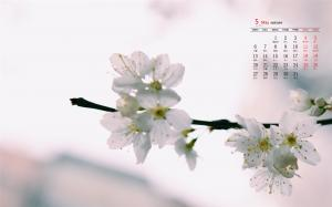 2019年5月清新美好可爱花卉高清日历壁纸
