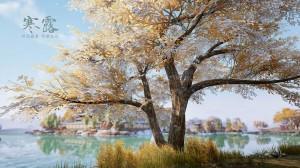 寒露之深秋的大树