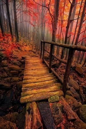 唯美治愈大自然秋天的树叶图片壁纸
