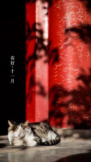 十一月你好之红墙下的小猫