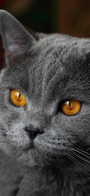 可爱宠物小猫咪高清手机壁纸