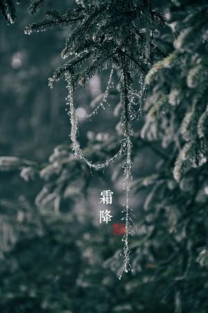 霜降树上结霜晶莹