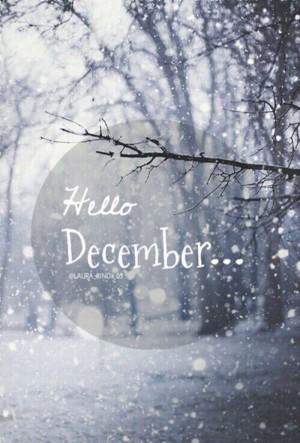 十二月你好大雪纷飞的树林