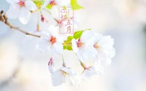 你好五月小清新樱花壁纸图片