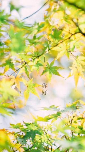 十一月你好秋天风景文字图片壁纸