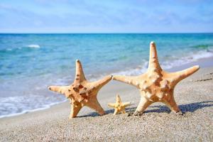 好看的海星图片