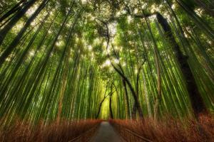 竹林小路风景高清壁纸