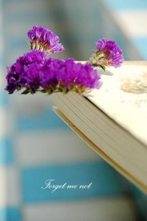 勿忘我紫色系