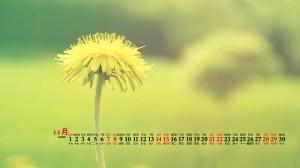 2020年11月黄色花朵清新植物桌面日历壁纸