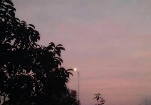 唯美意境天空中林木花草写真图片