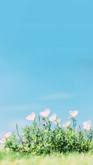 唯美小清新治愈花卉图片手机壁纸
