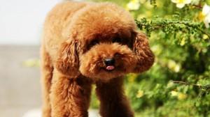 软萌乖巧可爱小狗图片壁纸