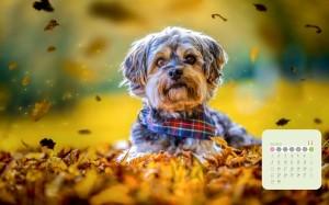 2020年11月秋日森林里的萌犬写真日历