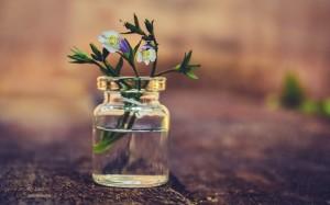 植物花卉清新图片桌面壁纸