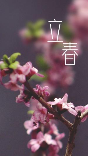 二十四节气之立春高清手机壁纸