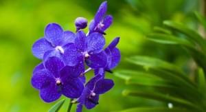 紫罗兰唯美高清手机壁纸