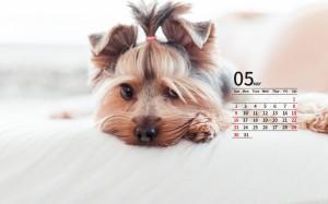 2021年5月萌宠狗狗日历壁纸图片