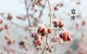 霜降时节清新自然风光图片