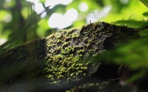 绿色植物清新护眼桌面壁纸