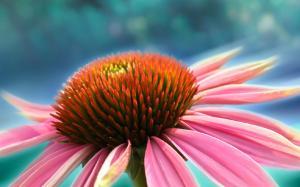 艳丽唯美鲜花微距摄影高清桌面壁纸