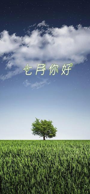一棵树一片绿七月你好的图片