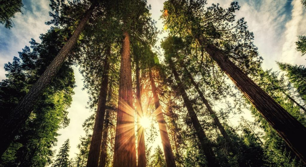 自然树木树叶唯美风景图片