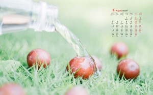 2019年8月夏日小清新日历壁纸图片
